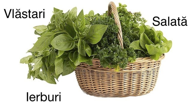 basket_of_herbs